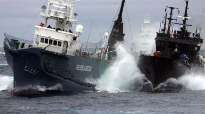 BREAKING NEWS – Japan's Whaling Program Deemed Illegal by High Court