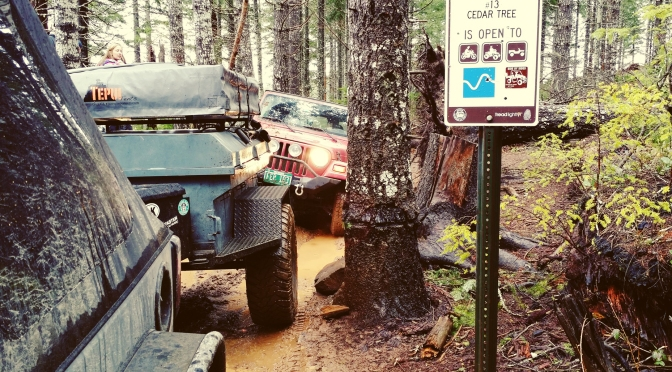 Trail Report: Cedar Tree [Oregon]