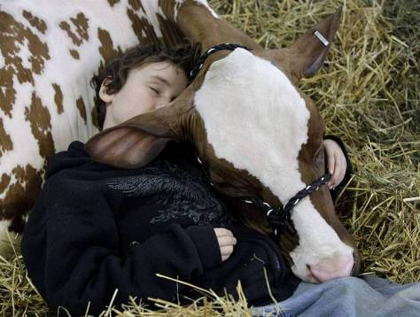 A cow would make a good buddy.