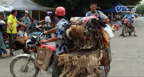 Dogs, often stolen, being transported to slaughter.